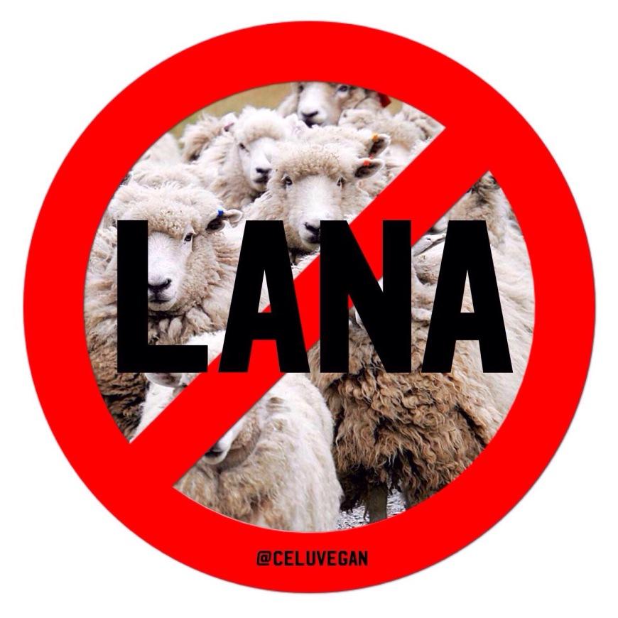 No-a-la-lana-de-oveja