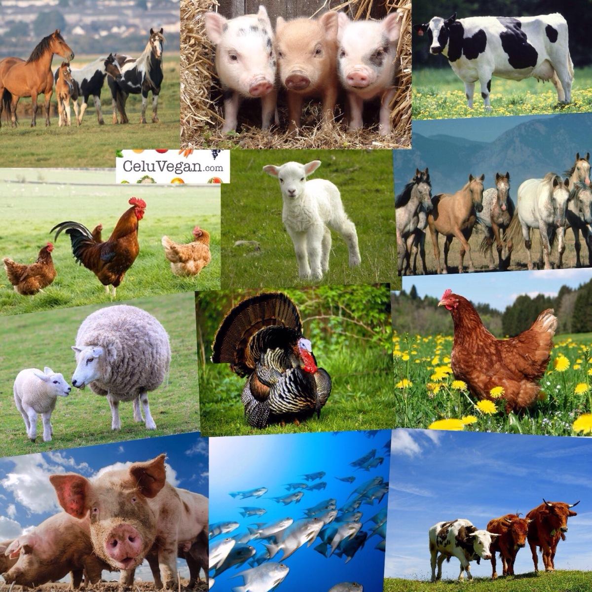Entender la disonancia cognitiva en las personas que comen carne